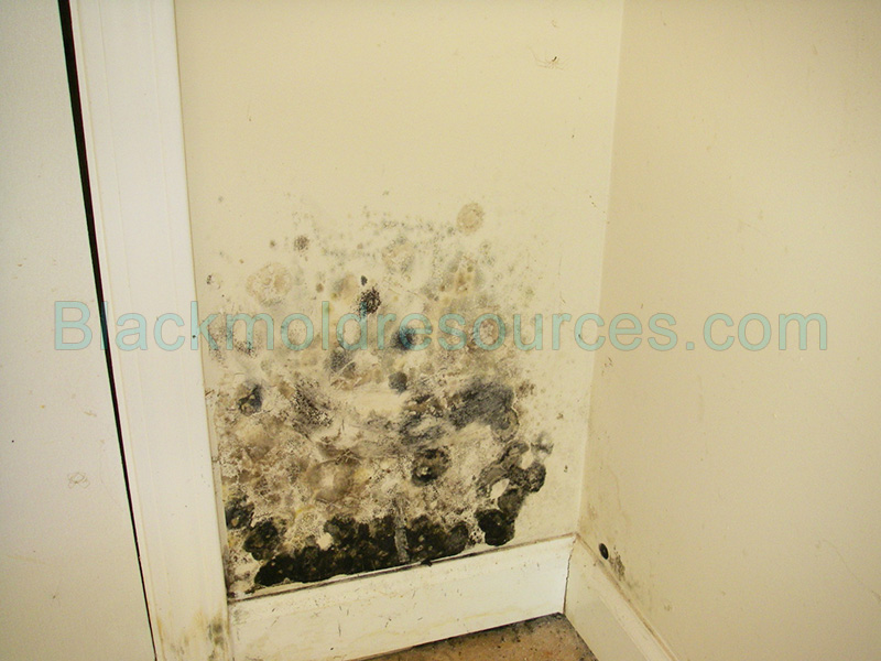 pictures of black mold indoor mold resources. Black Bedroom Furniture Sets. Home Design Ideas
