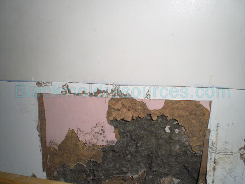 how to detect black mold in walls